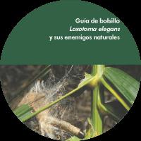 Guía de Bolsillo Loxotoma elegans y sus enemigos naturales