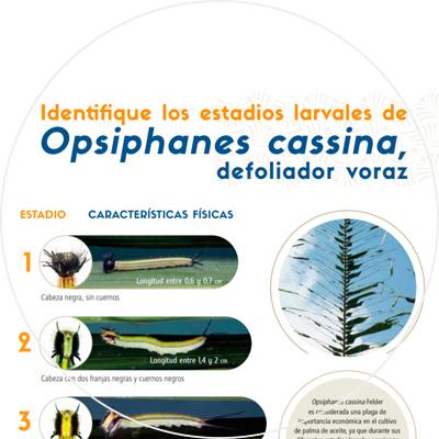 Afiche Identifique los estadios larvales de Opsiphanes cassina, defoliador voraz