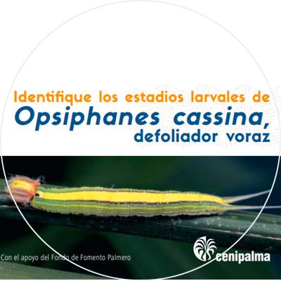 Folleto Identifique los estadios larvales de Opsiphanes cassina, defoliador voraz