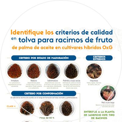 Afiche Identifique los criterios de calidad en tolva para racimos de fruto de palma de aceite en cultivares híbridos OxG
