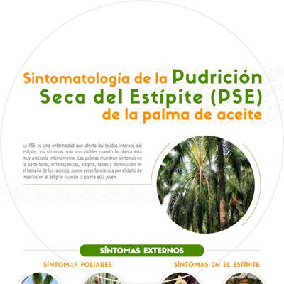 Afiche Sintomatología de la Pudrición Seca del Estípite (PSE) de la palma de aceite