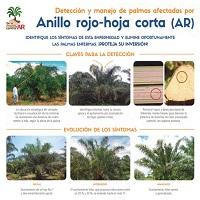 Detección y manejo de palmas afectadas por Anillo rojo-hoja corta AR en palma de aceite